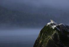 Unga arktiska tärnor Royaltyfri Fotografi