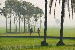 Unga bangladeshiska kvinnor går vid risfältet i dimmig morgon i Dhaka, Bangladesh Arkivbilder