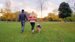 Unga bekymmerslösa par som går med en hund i parkera tillbaka sikt stock video