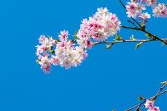 Unga blommaknoppar i vår i rosa färger, guling och vit i vår arkivbilder