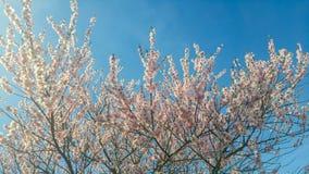 Unga blommaknoppar i vår i rosa färger, guling och vit i vår Royaltyfria Foton