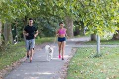 Unga caucasian par med hundspring parkerar, kopplar ihop in att jogga tillsammans arkivbild