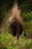 unga elefantmudpies Arkivbilder