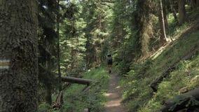Unga flickan går i bergskogen med bakpack - den Georgia nationalparken lager videofilmer