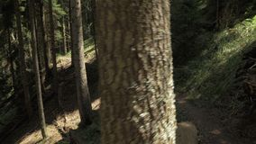 Unga flickan går i bergskogen med bakpack - den Georgia nationalparken arkivfilmer