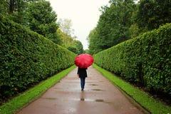 Unga flickan promenerar de gröna gränderna från buskarna i regnet med det röda paraplyet Royaltyfria Foton