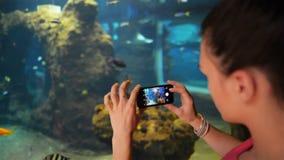 Unga flickan tar fotofiskar på akvariet Hon rymmer hennes telefon och tar foto stock video