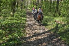 Unga flickor som rider på hästrygg till och med skogen Arkivbild