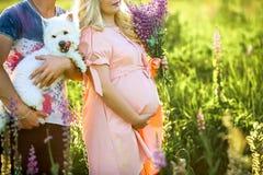 Unga härliga gravida par i blom- fält, med en bukett av purpurfärgade blommor och den vita hunden close upp Att vänta behandla so royaltyfria bilder