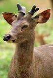 unga horns royaltyfria foton