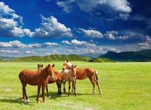 unga hästar Royaltyfri Fotografi