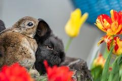Unga kaniner som sitter på en trädstubbe royaltyfri bild