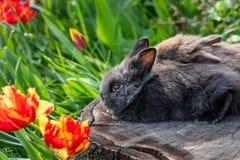 Unga kaniner som sitter på en trädstubbe arkivfoto