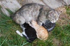 unga kattungar Arkivbilder