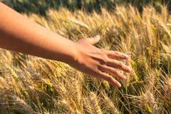 Unga kvinnliga flickor för vuxen kvinna räcker att trycka på ett fält av korn Royaltyfri Fotografi