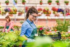 Unga kvinnor som arbetar i härlig färgrik blommaträdgård Royaltyfri Bild