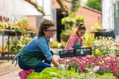 Unga kvinnor som arbetar i härlig färgrik blommaträdgård Arkivbilder