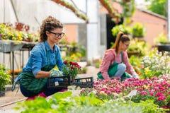 Unga kvinnor som arbetar i härlig färgrik blommaträdgård Royaltyfri Fotografi