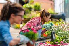 Unga kvinnor som arbetar i härlig färgrik blommaträdgård Royaltyfria Bilder