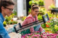 Unga kvinnor som arbetar i härlig färgrik blommaträdgård Arkivfoto