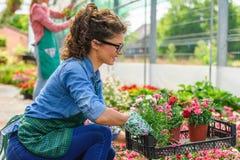 Unga kvinnor som arbetar i härlig färgrik blommaträdgård Arkivbild