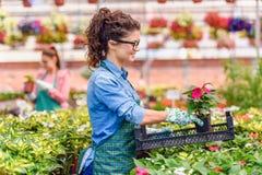 Unga kvinnor som arbetar i härlig färgrik blommaträdgård Fotografering för Bildbyråer