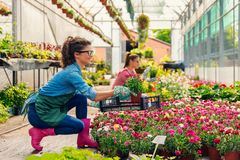 Unga kvinnor som arbetar i härlig färgrik blommaträdgård Royaltyfri Foto
