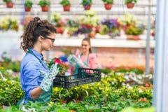 Unga kvinnor som arbetar i härlig färgrik blommaträdgård Royaltyfria Foton