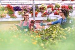 Unga kvinnor som arbetar i härlig trädgårds- mitt Royaltyfri Bild