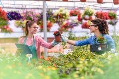 Unga kvinnor som arbetar i härlig trädgårds- mitt Arkivfoto