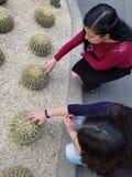 unga kvinnor som spelar ryggarna av en kaktusväxt royaltyfri fotografi