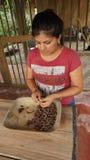 Unga latinska bönor för kvinnaskalningskakao Att ta bort skalet från kakaobönor är en del av processen för att göra handgjord cho Royaltyfria Bilder