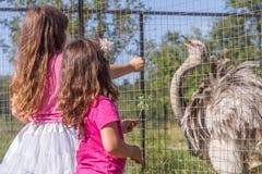 Unga lyckliga le barnflickor som matar emustrutsen på fågellantgård fotografering för bildbyråer