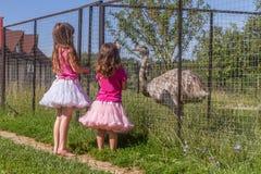Unga lyckliga le barnflickor som matar emustrutsen på fågellantgård royaltyfria foton