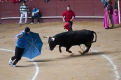 Unga manar som retar tjurar i Valdemorillo royaltyfria foton
