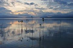 Unga mangroveväxter i havet under solnedgång runt om ön Pamilacan Royaltyfria Foton