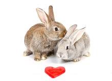 unga nyfikna kaniner Arkivbild