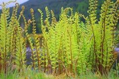 Unga ormbunkeväxter som växer på kanalbanken Arkivbild