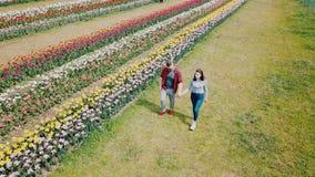 Unga par som går i ett tulpanfält stock video