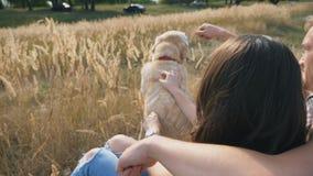 Unga par som sitter på gräs på ängen och slår hans labrador Familjen spenderar tid samman med hans husdjur i natur lager videofilmer