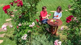 Unga par som tycker om mat och vin i härlig rosträdgård på romantiskt datum, flyg- bästa sikt från över av mannen och att äta för royaltyfria bilder