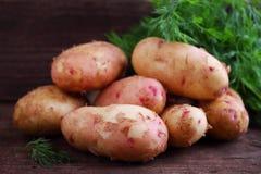 unga potatisar Fotografering för Bildbyråer