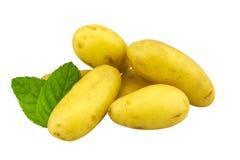 Unga potatishäxaliv som isoleras på vit Arkivfoton