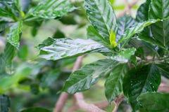 Unga sidor av gr?na blommor efter regn arkivfoton