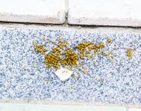 Unga spindlar som kläckas från ägg i redekolonin av nyfött Royaltyfria Bilder