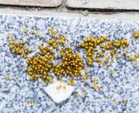 Unga spindlar som kläckas från ägg i redekolonin av nyfött Arkivbilder