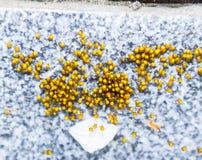 Unga spindlar som kläckas från ägg i redekolonin av nyfött Royaltyfri Foto