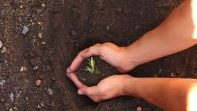 Unga tonåringhänder som planterar plantor stock video
