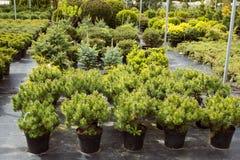 Unga träd i trädgården shoppar royaltyfri fotografi