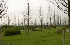 Unga träd och nytt grönt gräs i nytt parkerar i molnig dag arkivbilder